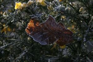 Wintery0116