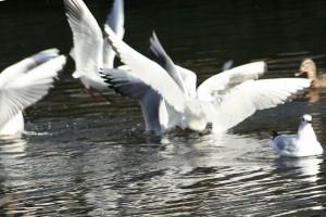 Birds0016